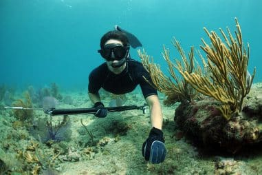 What Equipment Do You Need for Spearfishing