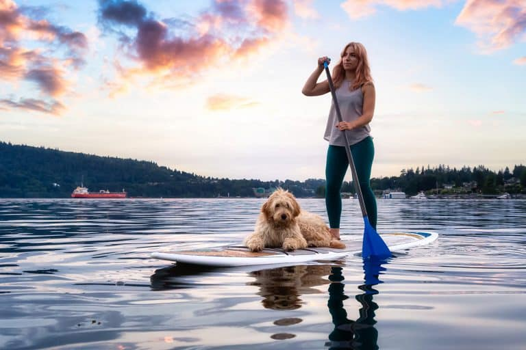 How Do You Train a Dog to Paddle Board